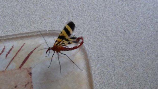 Đang dọn nhà thì phát hiện bọ cạp bay kinh dị, gia chủ thiếu điều bỏ của chạy lấy người - Ảnh 1.