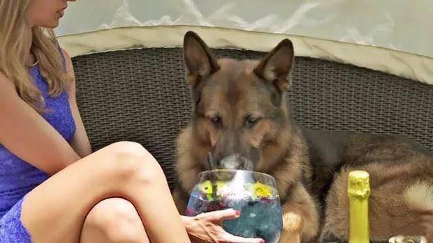 Gia tộc chó giàu nhất hành tinh: Tài sản 400 triệu USD,  sở hữu tập đoàn riêng, biệt thự 7000 mét vuông chạy mỏi chân - Ảnh 6.