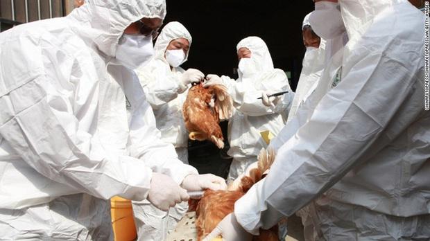 WHO khuyến cáo Việt Nam cần đề cao cảnh giác nhiễm cúm A (H5N8) từ gia cầm sang người - Ảnh 1.