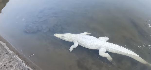 Nhóm thanh niên Hải Phòng gây phẫn nộ khi đăng clip ngược đãi động vật, sơn trắng cá sấu thành bạch tạng tiền tỷ để troll cho vui - Ảnh 1.