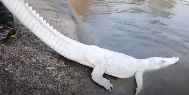 Nhóm thanh niên Hải Phòng gây phẫn nộ khi đăng clip ngược đãi động vật, sơn trắng cá sấu thành bạch tạng tiền tỷ để troll cho vui - Ảnh 3.