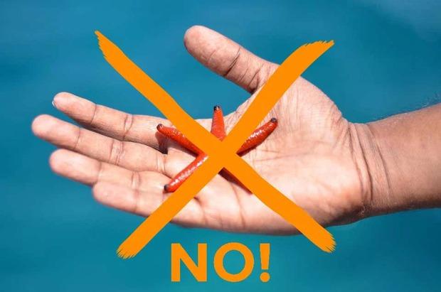 Đừng bao giờ check-in với thứ này khi đi biển Phú Quốc nếu bạn không muốn trở thành kẻ huỷ hoại nền sinh thái! - Ảnh 3.