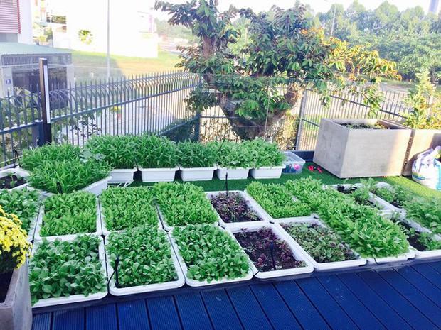 Lý Hải - Minh Hà trồng cây trên sân thượng mà thu hoạch nặng trĩu tay, phải đăng đàn ai ăn thì biếu bớt lấy thảo - Ảnh 9.