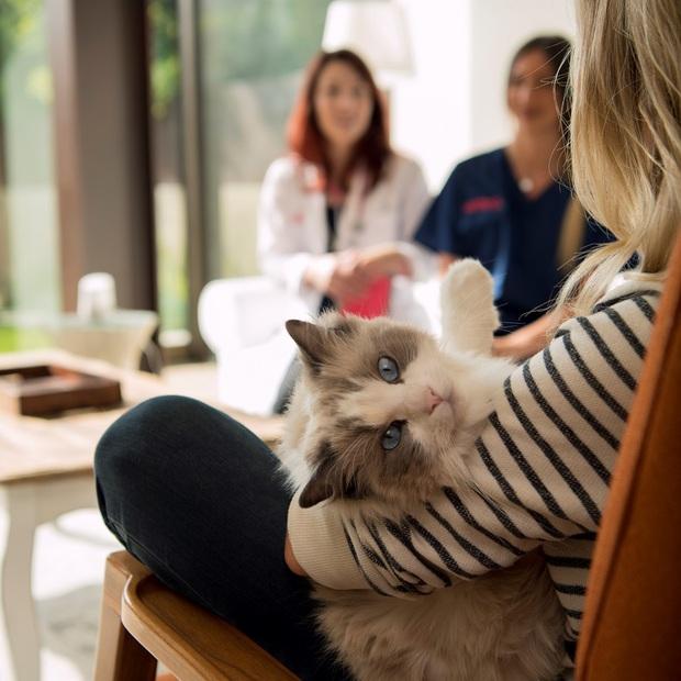 Dịch vụ sang chảnh chỉ chó mèo nhà giàu mới được hưởng: Ăn 300k/bữa, ở khách sạn 5 triệu/đêm - Ảnh 2.