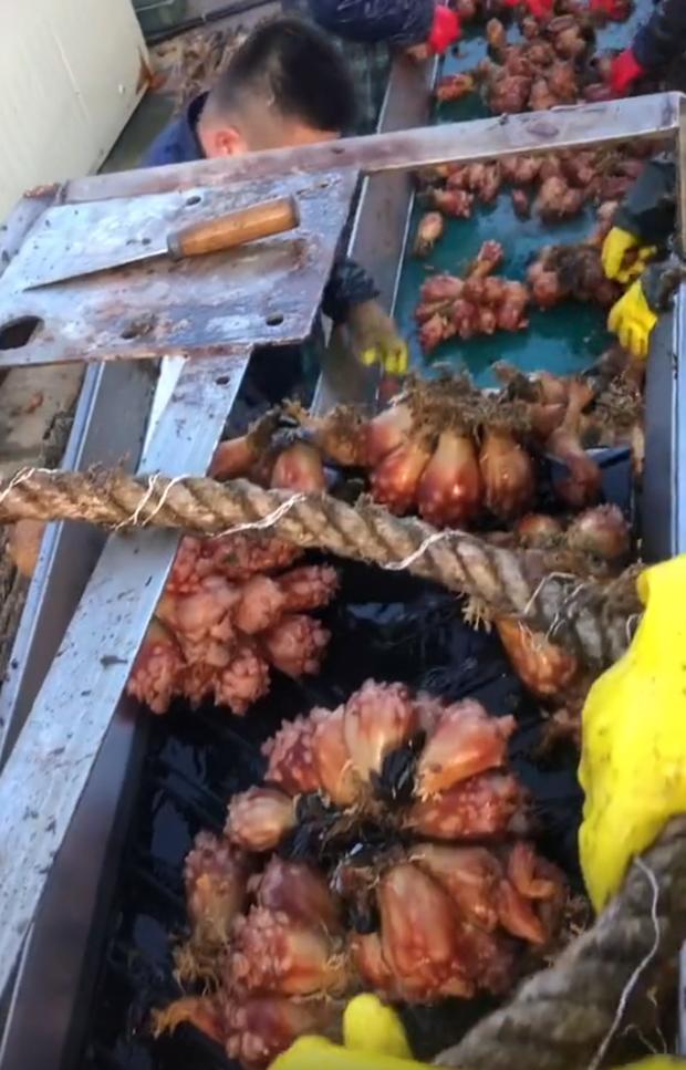 Việc nhẹ lương cao ở Hàn Quốc: Đứng tuốt loại sinh vật kỳ lạ ngay trên biển, nhận 50 triệu/tháng!? - Ảnh 4.