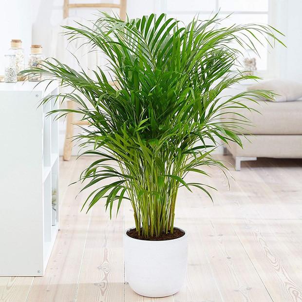 7 loại cây lọc không khí cực tốt được NASA khuyên nên trồng trong nhà - Ảnh 3.