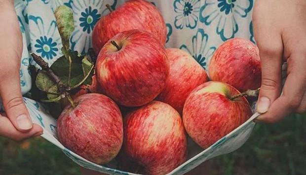 3 thời điểm ăn táo trong ngày có thể tăng hiệu quả giảm cân vượt trội mà không cần nhịn ăn - Ảnh 3.