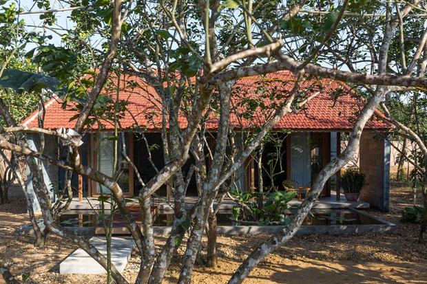Huế: Ngôi nhà gỗ nằm trọn trong khu vườn ngập tràn hoa bưởi đẹp lạ trên báo Mỹ - Ảnh 4.