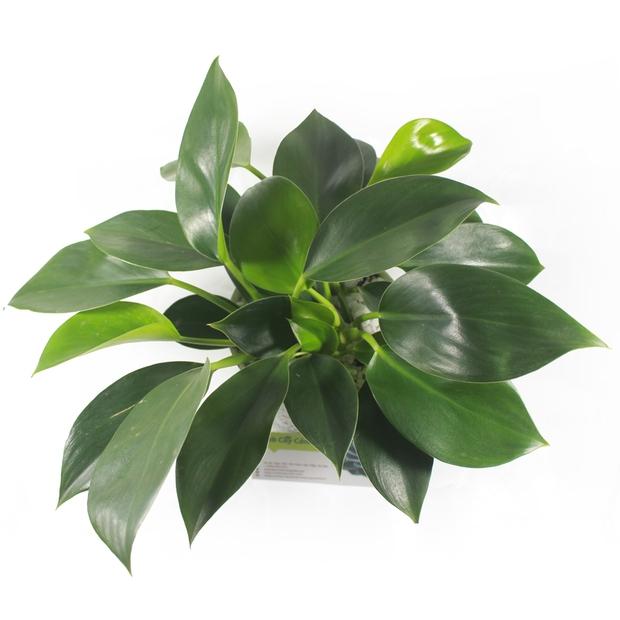 Mệnh Mộc rước lộc vào nhà với 4 loại cây cực kì dễ trồng và chăm sóc - Ảnh 2.