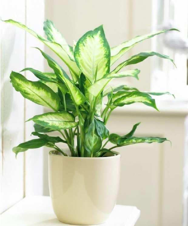 Mệnh Mộc rước lộc vào nhà với 4 loại cây cực kì dễ trồng và chăm sóc - Ảnh 4.