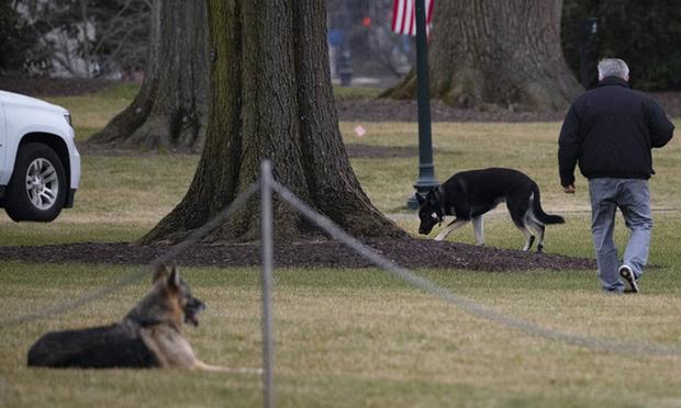 Chó cưng của Tổng thống Joe Biden bị đuổi về quê vì cắn mật vụ Nhà Trắng - Ảnh 1.