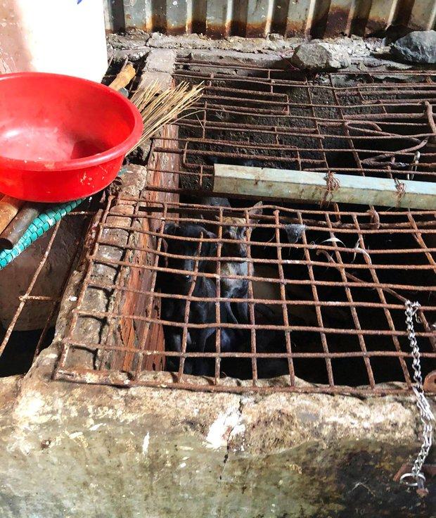 TP.HCM: Hàng chục con chó bị giết nằm la liệt trên sàn, phát hiện nhiều dụng cụ trộm chó - Ảnh 3.