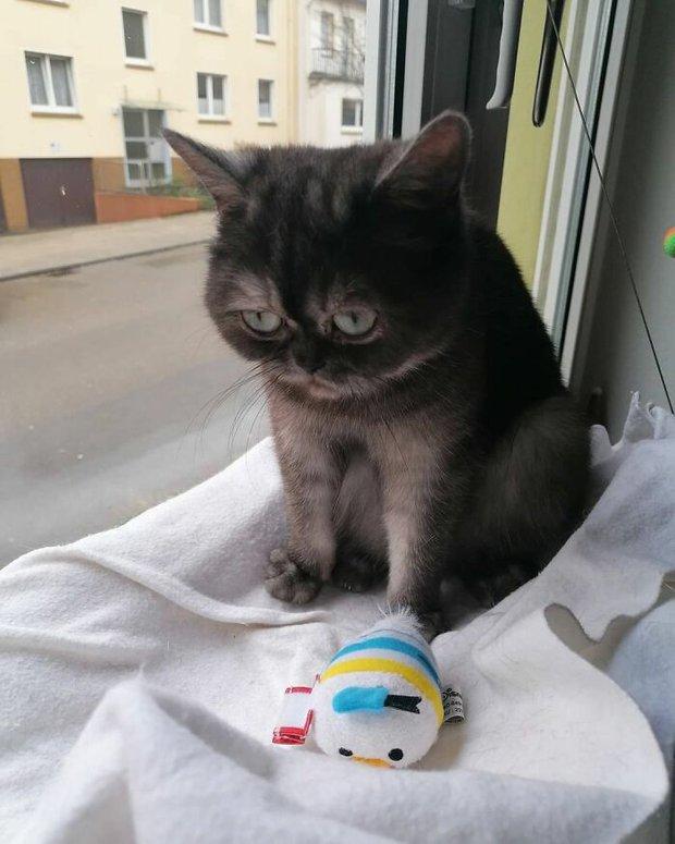 Chú mèo mồ côi bị ghẻ lạnh vì gương mặt sưng sỉa bẩm sinh, được cô chủ xinh đẹp nhận nuôi nên giờ lại tươi tắn như hoa - Ảnh 1.