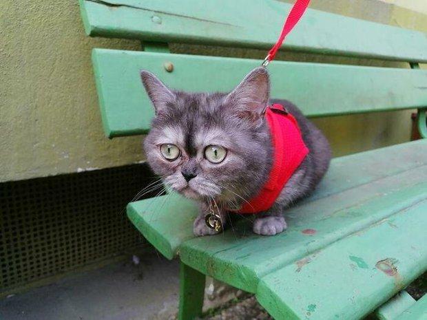 Chú mèo mồ côi bị ghẻ lạnh vì gương mặt sưng sỉa bẩm sinh, được cô chủ xinh đẹp nhận nuôi nên giờ lại tươi tắn như hoa - Ảnh 6.