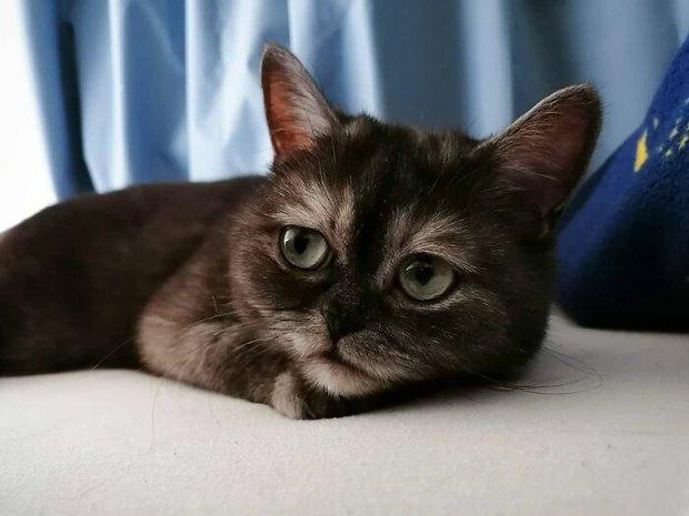 Chú mèo mồ côi bị ghẻ lạnh vì gương mặt sưng sỉa bẩm sinh, được cô chủ xinh đẹp nhận nuôi nên giờ lại tươi tắn như hoa - Ảnh 3.
