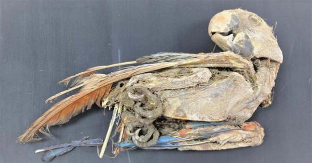 Bí ẩn 27 xác ướp không phải con người, đầy màu sắc ở nghĩa trang 3.500 tuổi - Ảnh 2.