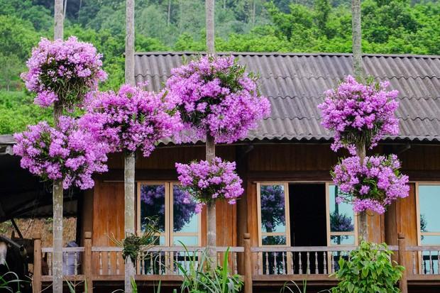 Cận cảnh vườn lan tím tuyệt đẹp treo trên hàng cây cau khiến ai cũng phải trầm trồ thích thú - Ảnh 1.
