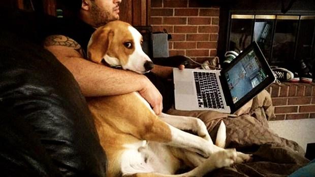 Nghiên cứu gây sốc: Chó cũng biết ghen bóng ghen gió với chủ, vậy mới thấy chúng giống người đến mức nào - Ảnh 3.