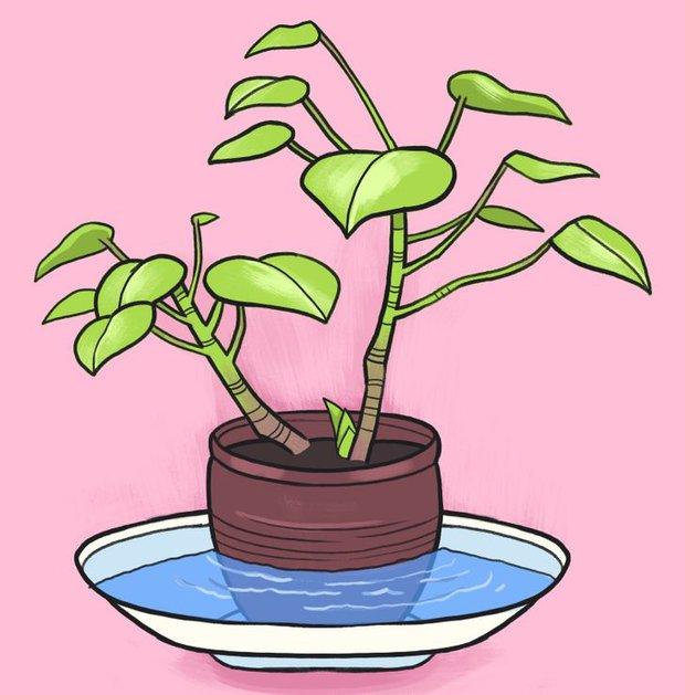 Vắng nhà vẫn có thể chăm cây ngon ơ với 5 cách đơn giản nhưng siêu hiệu quả - Ảnh 1.