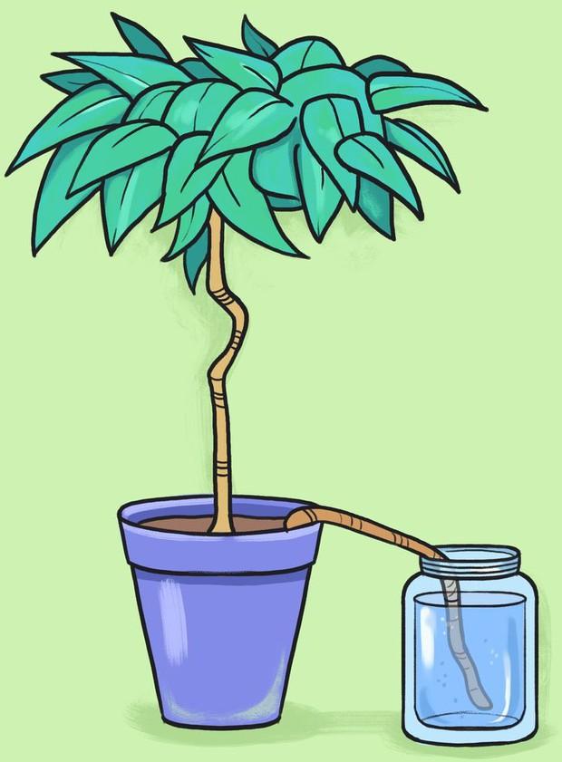 Vắng nhà vẫn có thể chăm cây ngon ơ với 5 cách đơn giản nhưng siêu hiệu quả - Ảnh 4.