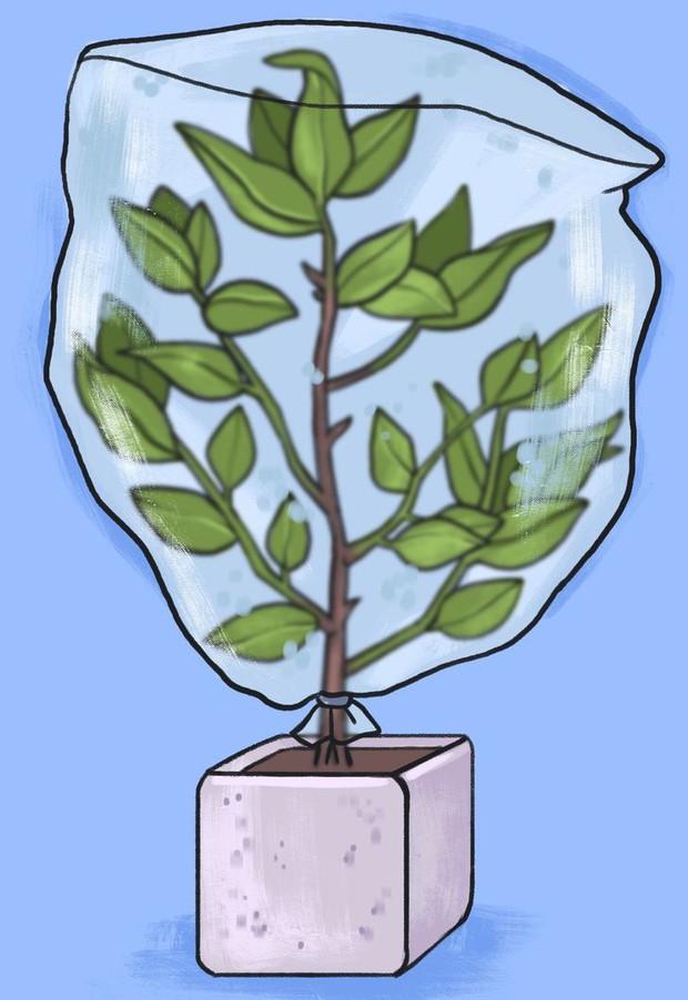 Vắng nhà vẫn có thể chăm cây ngon ơ với 5 cách đơn giản nhưng siêu hiệu quả - Ảnh 5.