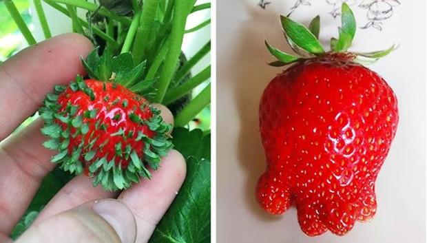 Những cảnh tượng biến thiên hiếm gặp của các loại đồ ăn, ngoài tự nhiên quả là lắm điều khó lường - Ảnh 15.