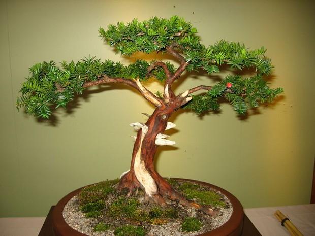 9 loại cây vẫn sống nhăn dù bạn quên tưới nước, người vụng mấy cũng trồng được - Ảnh 7.
