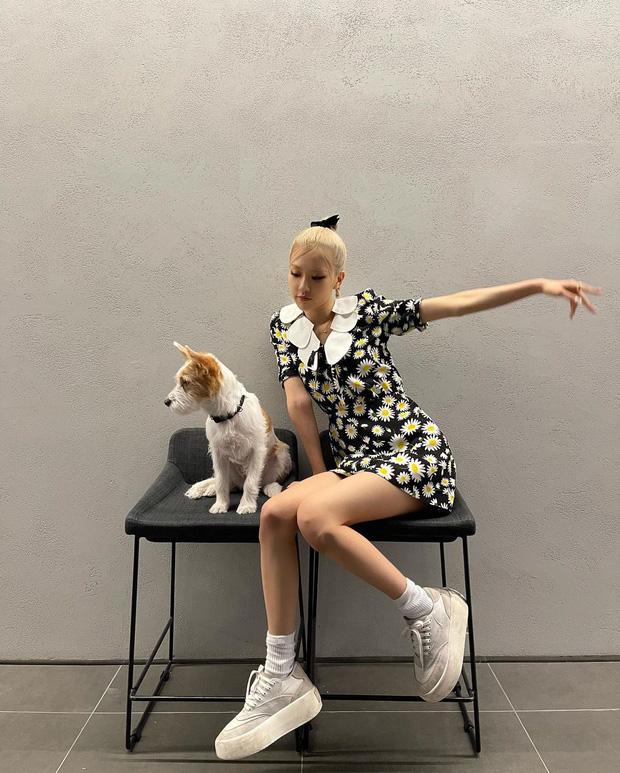 Cún cưng của Rosé lắm đồ xinh ghê: Từ đồ chơi vài trăm nghìn đến áo tiền triệu sành điệu như người - Ảnh 1.