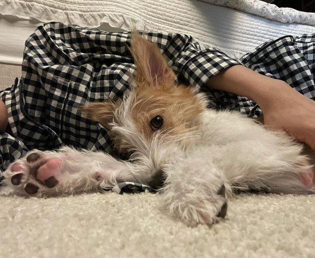 Cún cưng của Rosé lắm đồ xinh ghê: Từ đồ chơi vài trăm nghìn đến áo tiền triệu sành điệu như người - Ảnh 2.