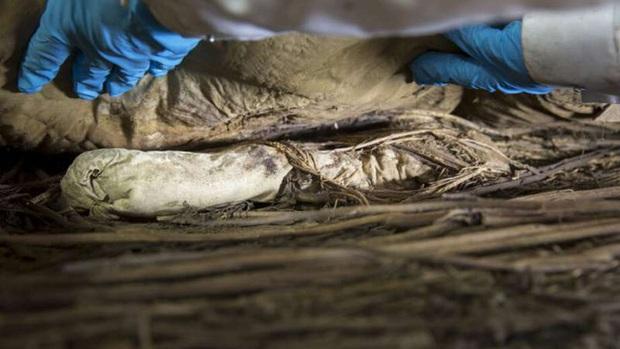 Chụp X-quang quan tài chứa xác ướp 300 tuổi của người đàn ông, các nhà khoa học ngỡ ngàng phát hiện bào thai ngay dưới chân - Ảnh 2.