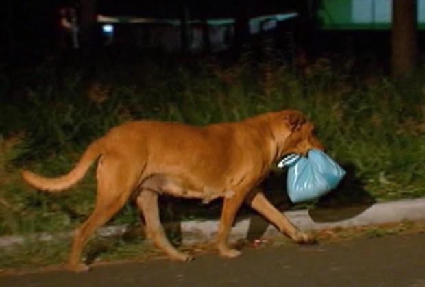 Phát hiện chó cưng đêm nào cũng lẻn ra ngoài, nữ chủ nhân âm thầm theo dõi để rồi xúc động trước việc làm của con vật - Ảnh 3.