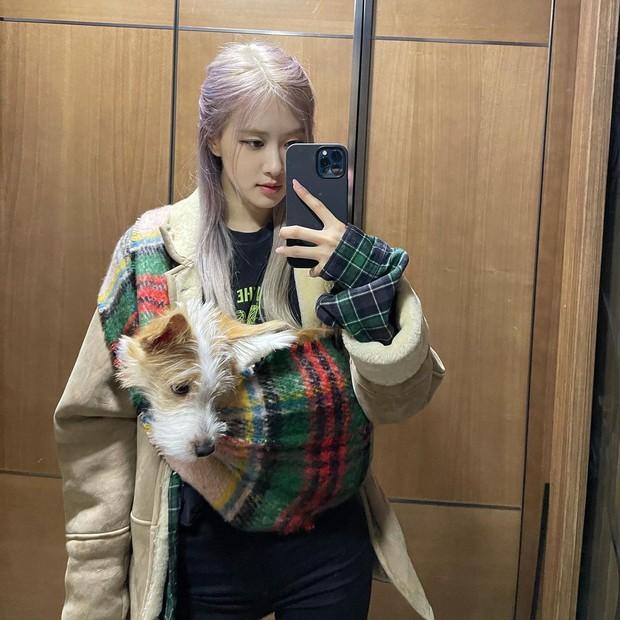Cún cưng của Rosé lắm đồ xinh ghê: Từ đồ chơi vài trăm nghìn đến áo tiền triệu sành điệu như người - Ảnh 3.