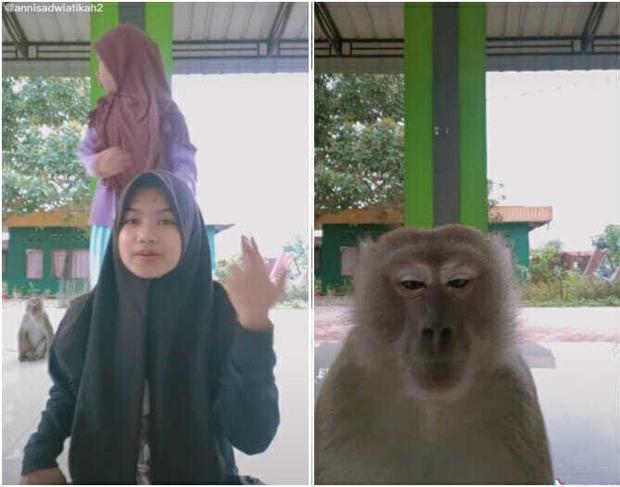 Clip: Chú khỉ thành ngôi sao TikTok sau màn trấn lột điện thoại của thiếu nữ 16 tuổi - Ảnh 2.