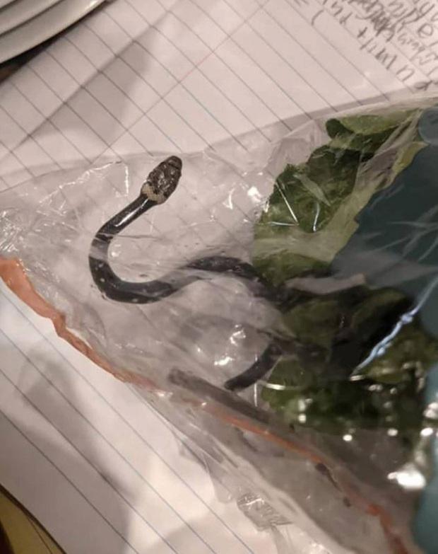 Mua túi rau diếp ở siêu thị về làm salad, người phụ nữ chưa kịp mở ra đã thất kinh bạt vía khi thấy thứ nguy hiểm chết người bên trong - Ảnh 2.