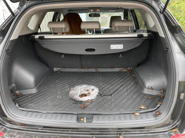 """Để quên bịch cua đồng trên ô tô, khổ chủ suýt ngất khi mở xe ra: Dân mạng sợ hãi đến mức """"bịt mũi"""" vì lý do này - Ảnh 1."""