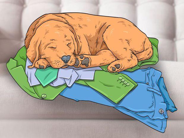 7 hành động kỳ quái của chú chó bạn nuôi và lý do đằng sau ai cũng cần biết, đặc biệt là hành động cuối cùng - Ảnh 6.