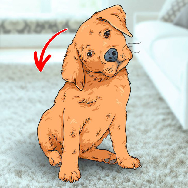 7 hành động kỳ quái của chú chó bạn nuôi và lý do đằng sau ai cũng cần biết, đặc biệt là hành động cuối cùng - Ảnh 7.
