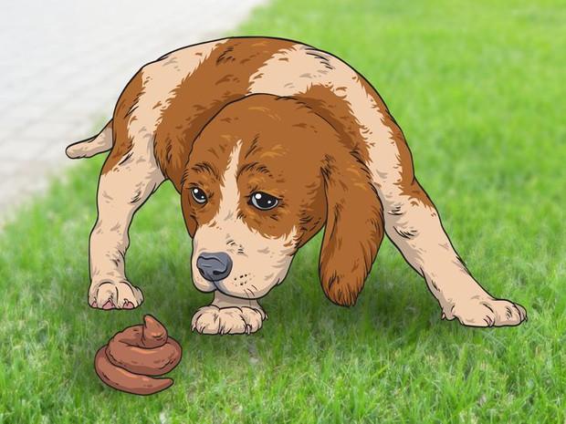7 hành động kỳ quái của chú chó bạn nuôi và lý do đằng sau ai cũng cần biết, đặc biệt là hành động cuối cùng - Ảnh 8.