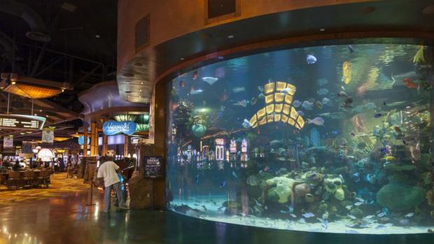 Tác hại của thời đại 4.0: Hacker thâm nhập hệ thống bảo mật của casino thông qua nhiệt kế trong bể cá - Ảnh 1.