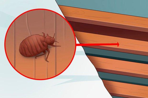 5 dấu hiệu cho thấy rệp đang làm tổ trong nhà của bạn, hãy cẩn thận - Ảnh 2.