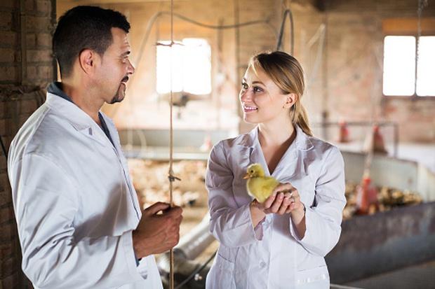 Nước Mỹ treo giải thưởng gấp 5 lần Nobel cho ai nghĩ ra cách cứu sống 7 tỷ con gà trống mỗi năm - Ảnh 4.