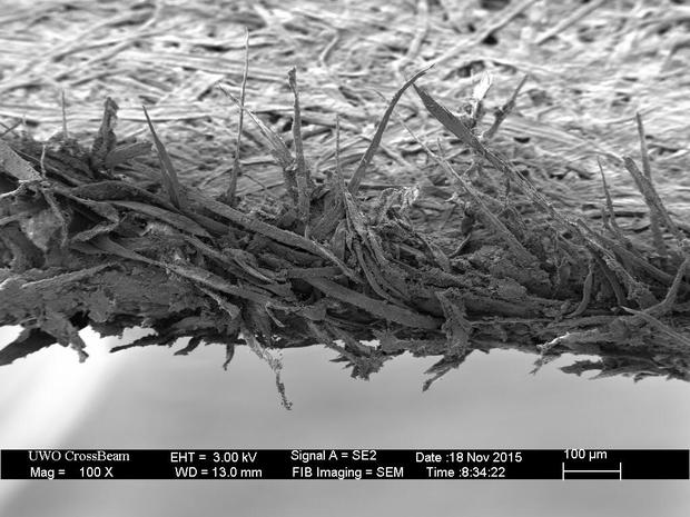Nhìn dưới kính hiển vi loạt đồ vật như tế bào chết, trứng gà, cạnh giấy A4 sẽ trông như thế nào? - Ảnh 1.