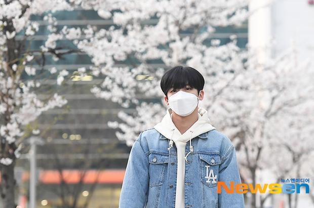 Mùa hoa anh đào nở rộ, sao Hàn đua nhau check-in sống ảo: Loạt mỹ nhân khoe sắc, idol đến diễn viên ra đường là có ảnh đẹp - Ảnh 12.