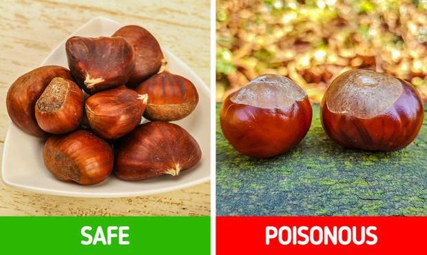 9 loài thực vật luôn khiến con người nhầm lẫn tai hại: Loại thì ăn được, loại lại có độc và cần né xa - Ảnh 9.
