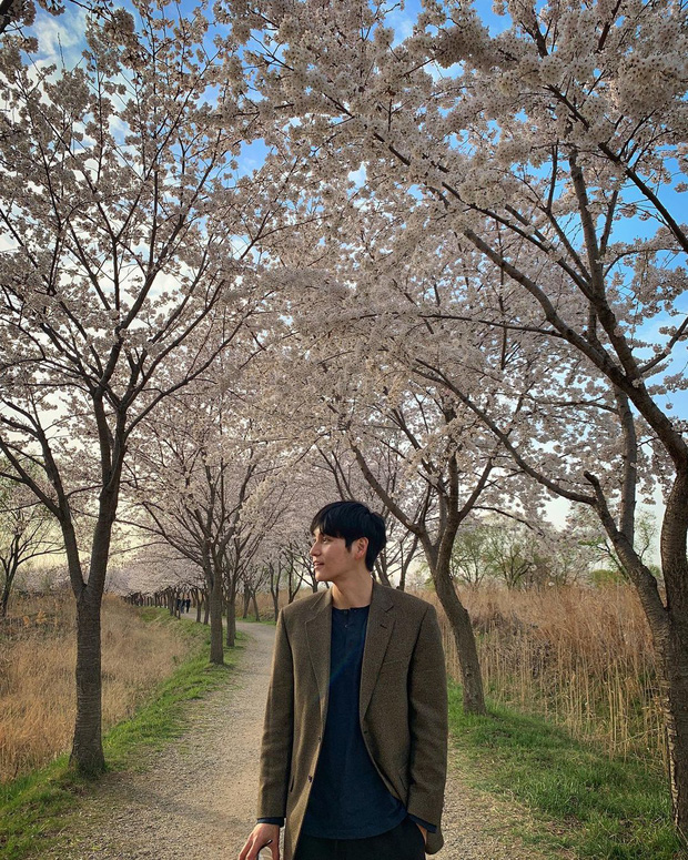 Mùa hoa anh đào nở rộ, sao Hàn đua nhau check-in sống ảo: Loạt mỹ nhân khoe sắc, idol đến diễn viên ra đường là có ảnh đẹp - Ảnh 13.