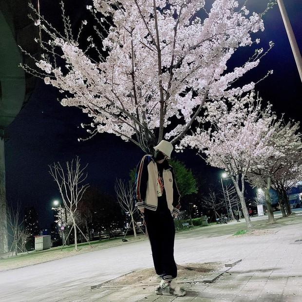 Mùa hoa anh đào nở rộ, sao Hàn đua nhau check-in sống ảo: Loạt mỹ nhân khoe sắc, idol đến diễn viên ra đường là có ảnh đẹp - Ảnh 11.