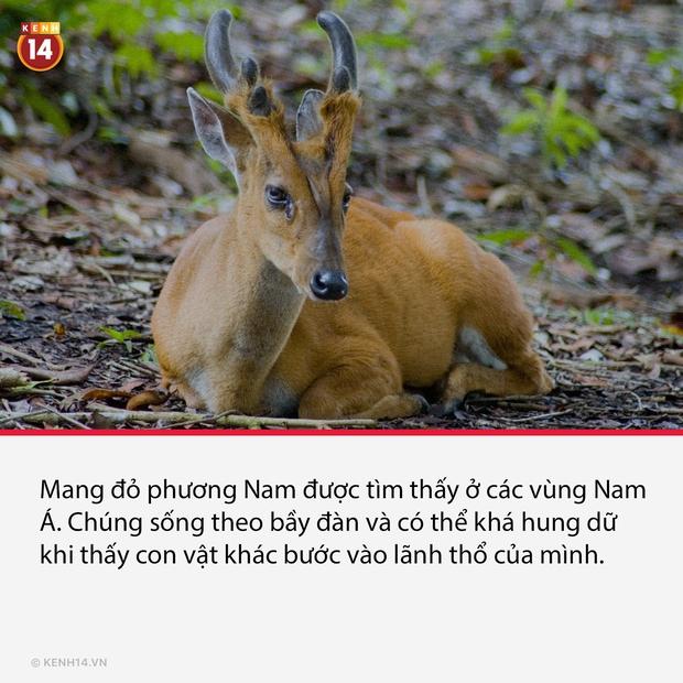 15 loài dị thú có ngoại hình kỳ lạ và hiếm có, đảm bảo nhiều người thấy chúng lần đầu - Ảnh 12.