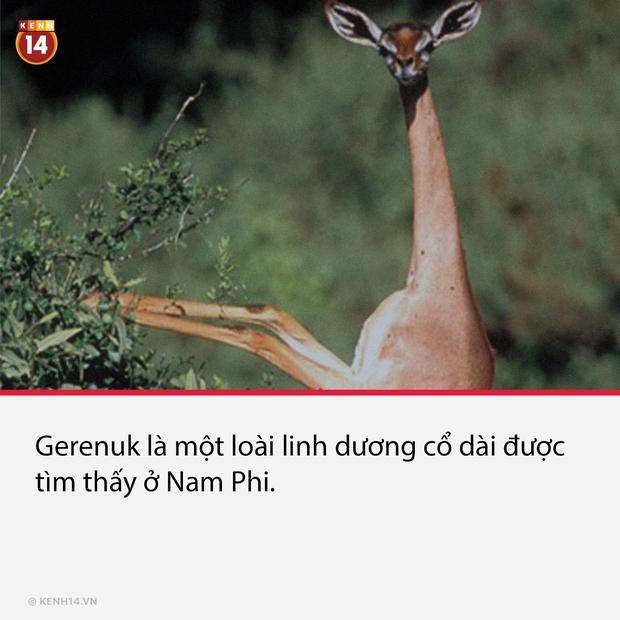 15 loài dị thú có ngoại hình kỳ lạ và hiếm có, đảm bảo nhiều người thấy chúng lần đầu - Ảnh 5.