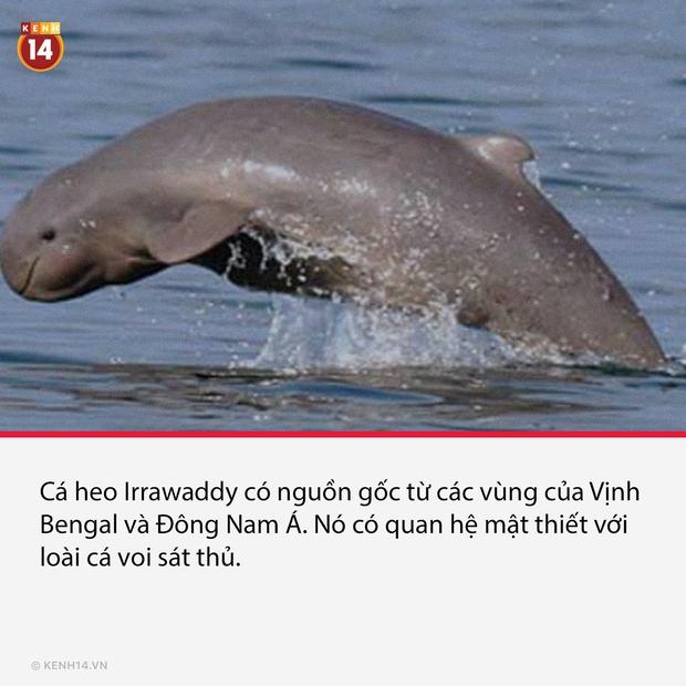 15 loài dị thú có ngoại hình kỳ lạ và hiếm có, đảm bảo nhiều người thấy chúng lần đầu - Ảnh 7.