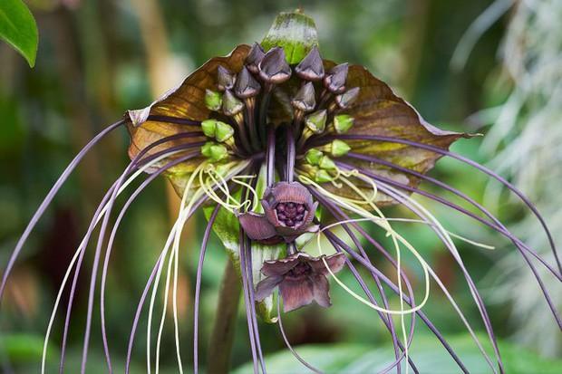 15 loài hoa sở hữu ngoại hình kỳ lạ như được hái ra từ phim viễn tưởng - Ảnh 11.